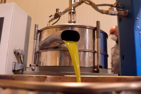 Aceite de oliva Vega de Pliego